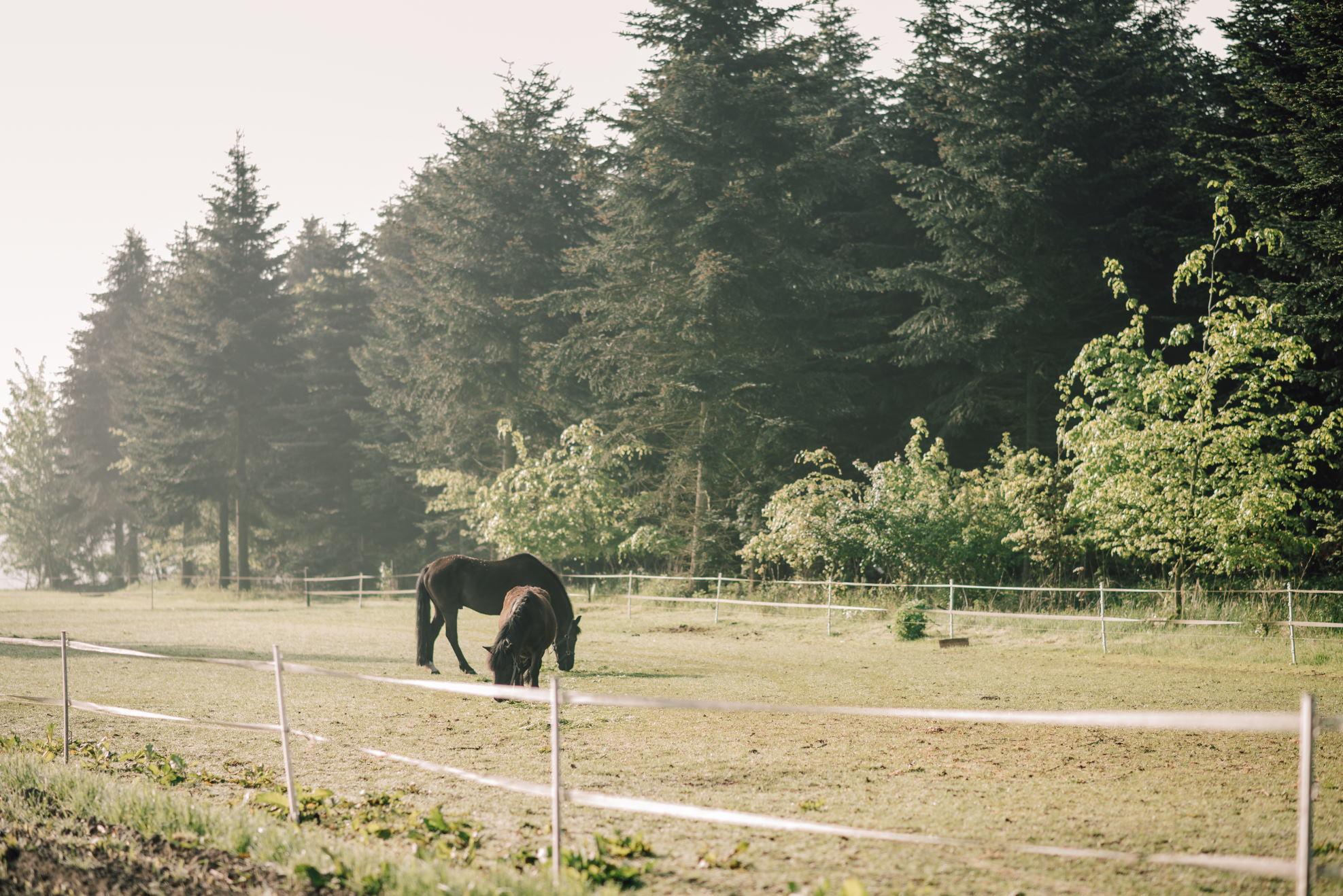 Die Ponys Benni und Snoopy